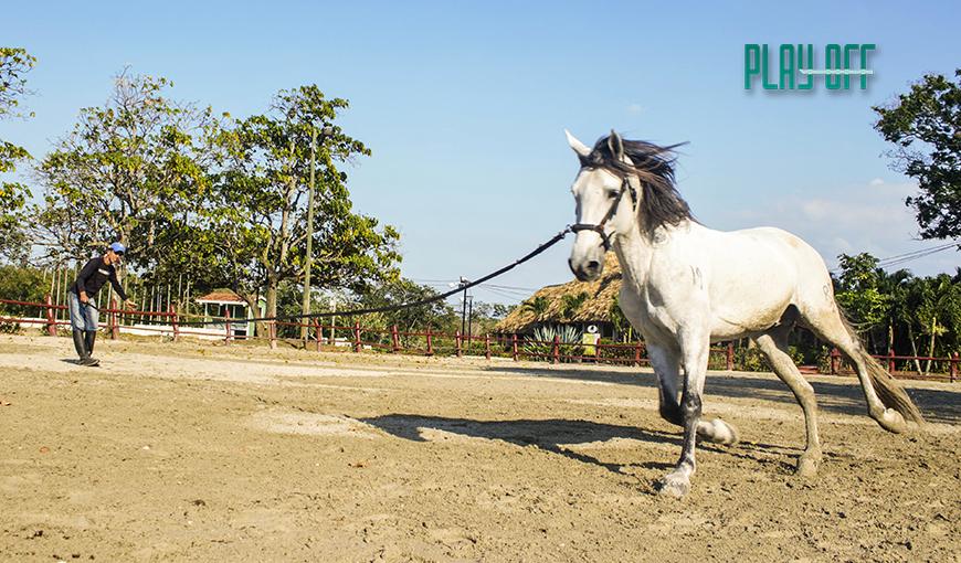 Equitación en Cuba: un galope inadvertido